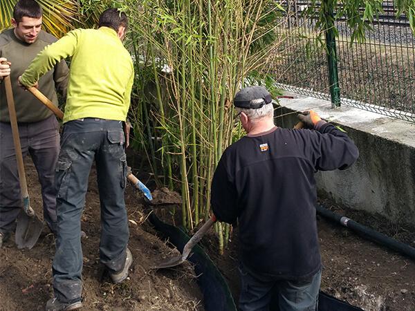 Plantation de bambou dans les règles de l'art