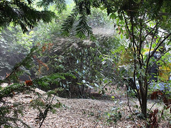 Etalage des branches broyées dans vos massifs
