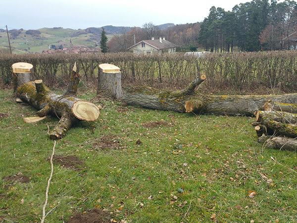 Abattage de tout type et hauteur d'arbre